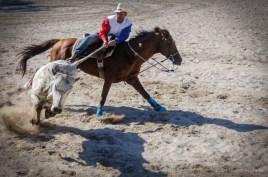 Vaquero compite en el coleo de toros en el Torneo Internacional de Rodeo y Coleo, durante la Feria Internacional Agroindustrial Alimentaria (FIAGROP) de Rancho Boyeros el viernes 21 de marzo de 2014 en La Habana, Cuba. FOTO de Calixto N. Llanes/Juventud Rebelde (CUBA)