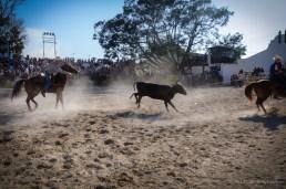Vaqueros compiten en lazo doble en el Torneo Internacional de Rodeo y Coleo, durante la Feria Internacional Agroindustrial Alimentaria (FIAGROP) de Rancho Boyeros el viernes 21 de marzo de 2014 en La Habana, Cuba. FOTO de Calixto N. Llanes/Juventud Rebelde (CUBA)