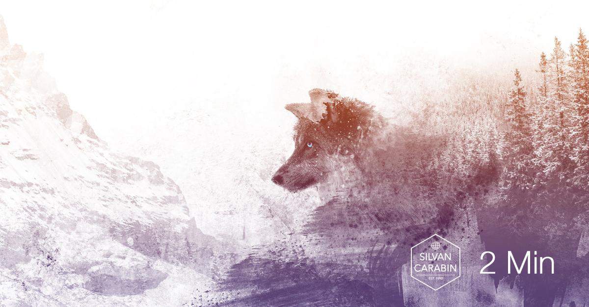 Der Traum vom Wolf – wie wir den Frieden des Himmels erleben können
