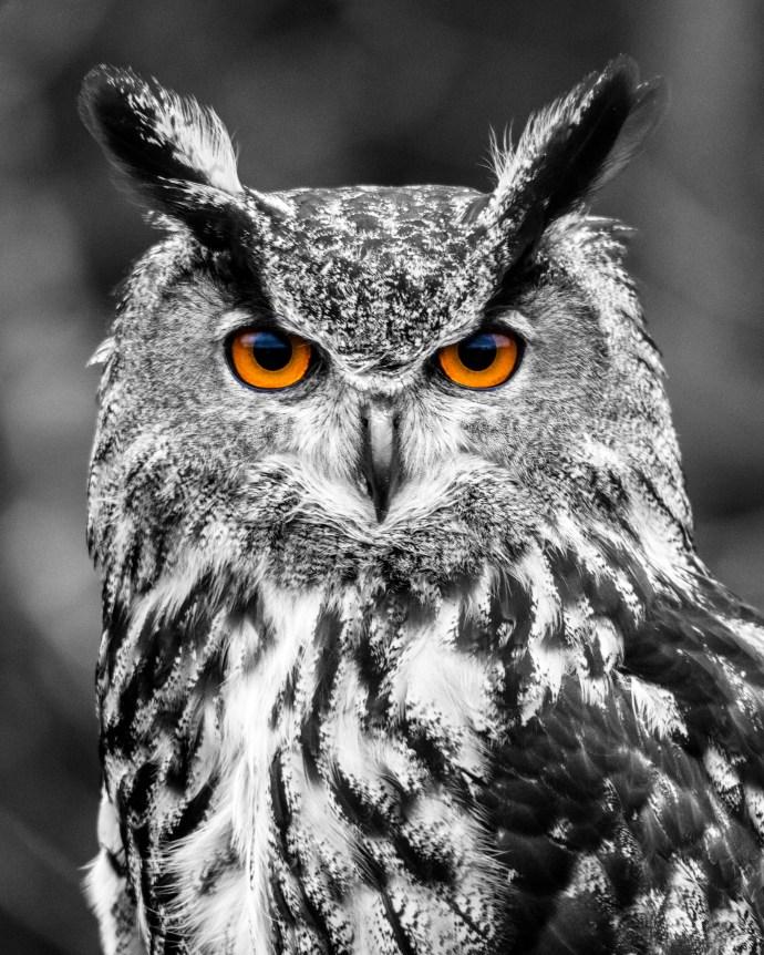 owl-001