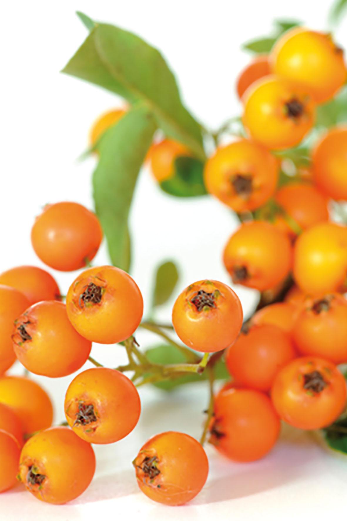 Ein Nahrungsergänzungsmittel mit Sanddorn, Vitaminen, sekundären Pflanzenstoffen sowie Omega-Fettsäuren kann die Schleimhäute im Genitalbereich gezielt regenerieren und Intimität wieder lustvoll machen