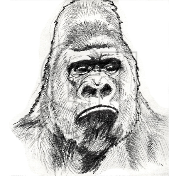 The Silverback Digest