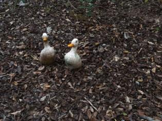1-ducks