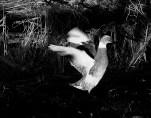 ral-12-ducks