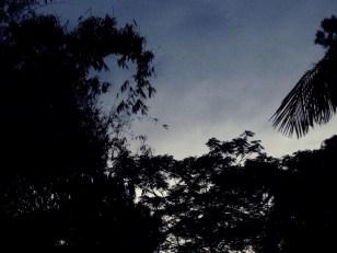 small-bats