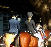 0SHOW HORSE
