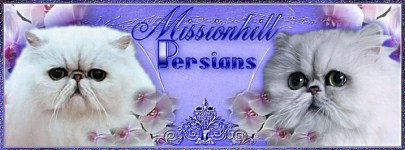 Missionhillbanner.Dianne.a.