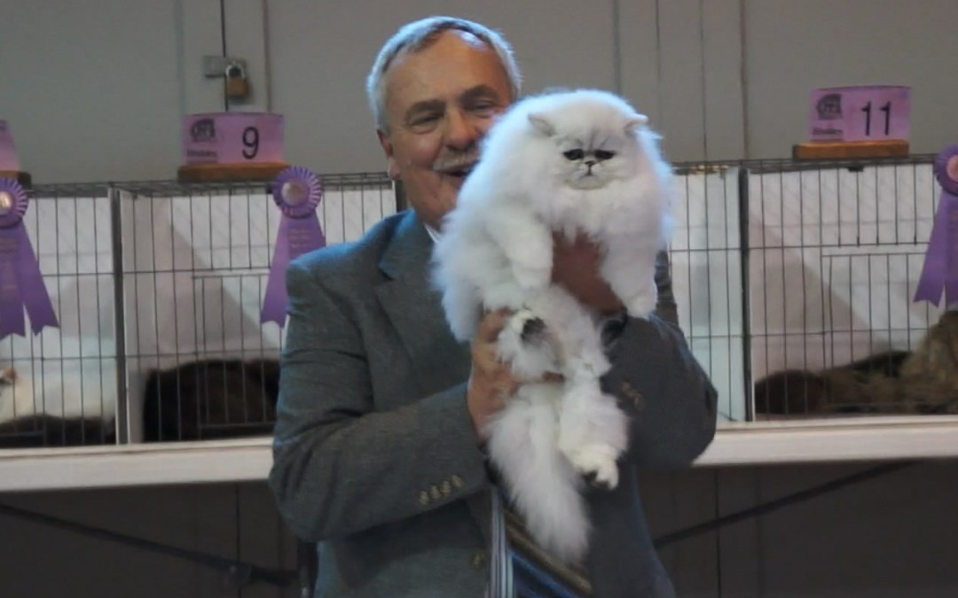 MoKan cat show 3/10/2012 Kansas