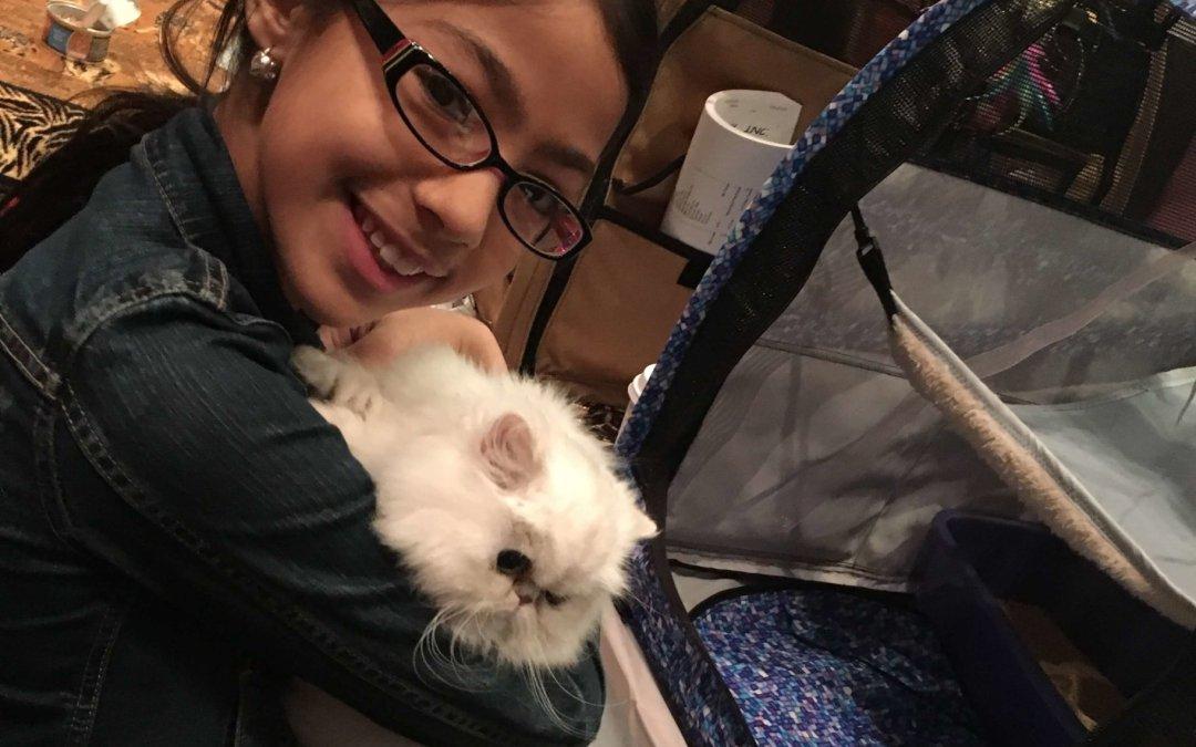 Champion Silverdonia Nour's first CFA cat show! Shaded silver Persian cat 2016 – IL