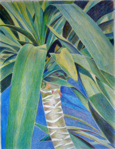 """My first """"limited palette"""" colored pencil drawing."""