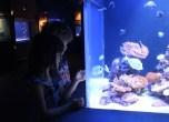 Aquarium 014