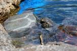 Aquarium 053