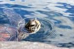 Aquarium 055