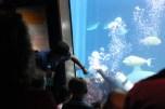Aquarium 098