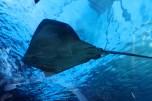 Aquarium 123