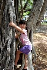 Banyan tree again