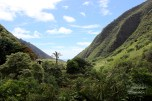 Iao valley state park 016