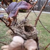 Empty-nest syndrome