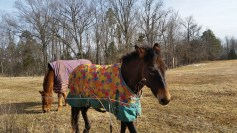 Prada, the mule, in spring attire