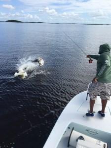 Everglades tarpon fishing