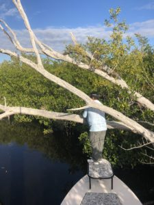 Everglades National Park Fishing Guide