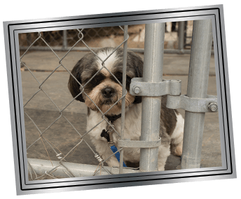 framed_dog (1)