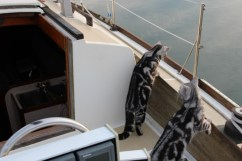 OP-Bella-and-Zoe-May-30-2014-the-Sailor-Cats-looking-over-the-side-of-the-boat