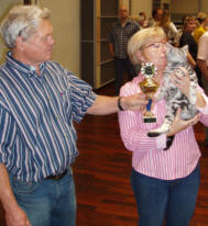 OP-Gus-Aug-11-2009-American-Shorthair-silver-tabby-kitten-with-cat-show-judges