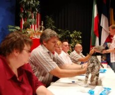 OP-Gus-Nov-6-2009--American-Shorthair-silver-tabby-cat-receives-best-in-show-from-table-of-judges