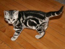 Image of How kittens change left side 12 weeks