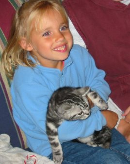 Image of blonde girl in blue shirt holding silver tabby American Shorthair kitten