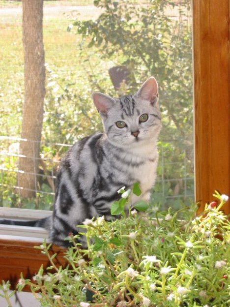 Image of cat supplies window perch