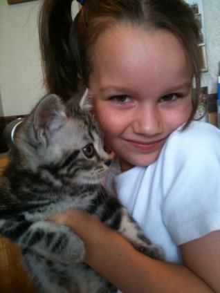 Image of girl holding gray American Shorthair silver tabby kitten at vets office