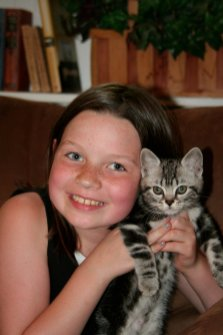 Image of girl holding gray American Shorthair silver tabby kitten