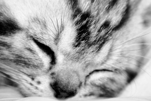 Black and white close up image of sleeping kitten