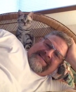 Image of American shorthair silver tabby kitten perches on mans shoulder