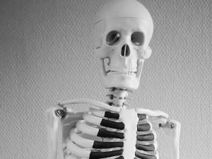 Modell av skelett