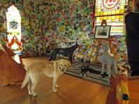 Miss Tahoe puzzling over the canine crew in the chapel.