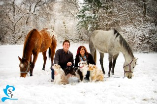 Provo photography with dogs and horses