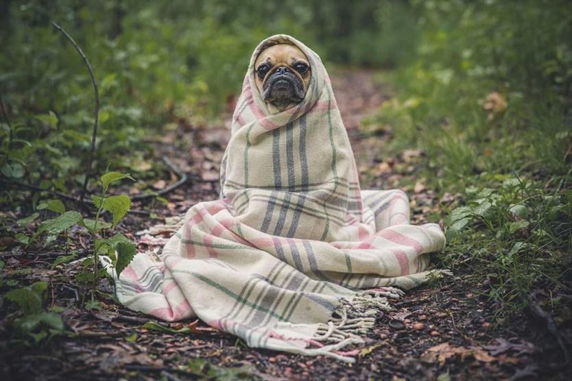 Dog wrapped up warm on dog friendly holidays