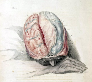 Charles Bell: Anatomy of the Brain, c. 1802 by brain_blogger  (cc) (From Flickr)