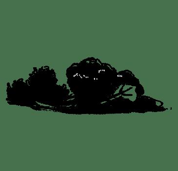 Verdures de fulla verda