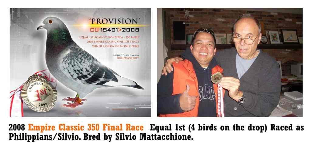 Silvio's Racing Pigeons - Bred & Sold | One Loft Races