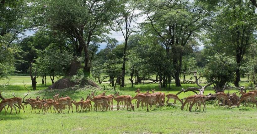 mosi oa tunya national park