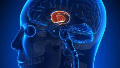 Alzheimer Hastalığına Yakalanma Riskini Azaltan Besinler