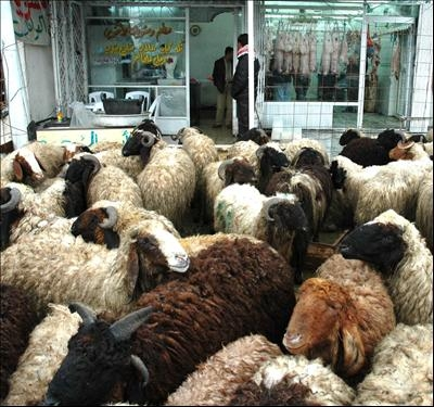 The slaughter of the sheep