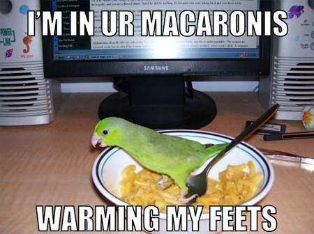 silly photo gag about parrots