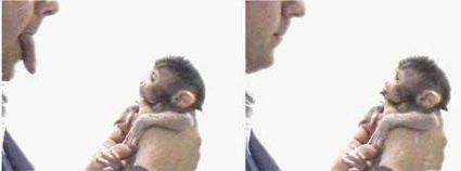 monkey see monkey do - study about monkeys