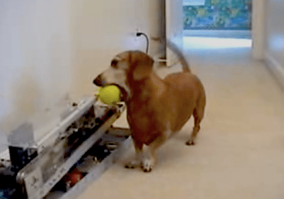 dog returning ball to robot ballthrower