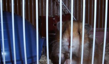 hamster  - photo by jeremy clarke